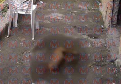 Reportan envenenamiento masivo de perros en la colonia Prieto Crispín